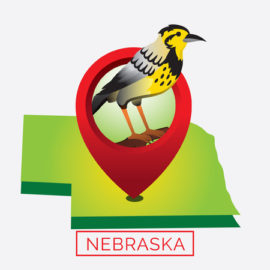 Nebraska LPC Requirements